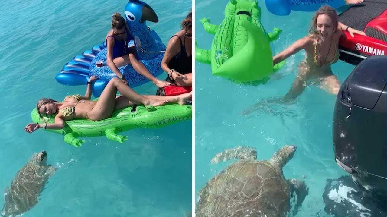 in a popular resort in Turkey, a turtle attacked the holidaymakers in the sea, biting them hard